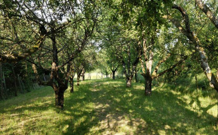 Obstbaumbestand Freizeitgrundstück Beilstein